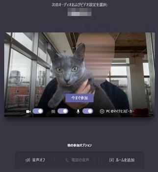 telework_and_cat.JPG